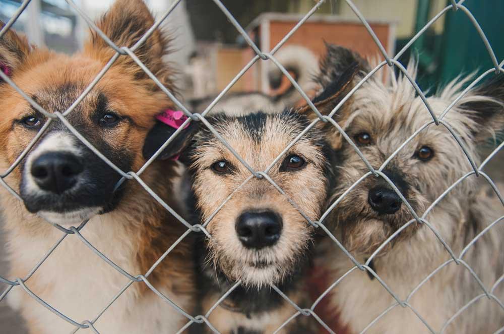 Приют для собак в нашем районе: ваше мнение?
