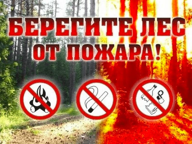 Селивановское лесничество напоминает о правилах пожарной безопасности в лесах