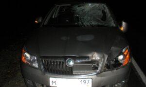 Житель города Мурома сбил лося