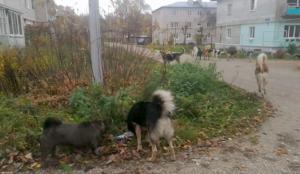 Собаки и ныне там